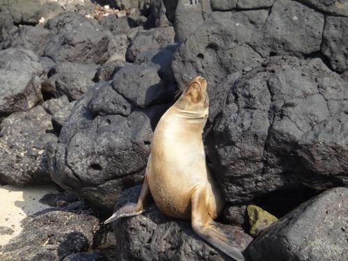 Galapagos Cruise Day 2