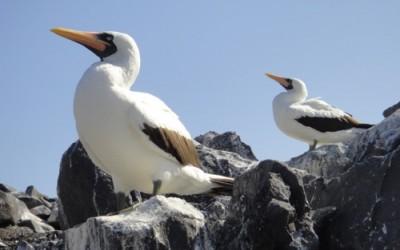 Galapagos Cruise Day 3