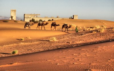 Questions to Ask Before Going on a Camel Trek to the Sahara Desert in Merzouga