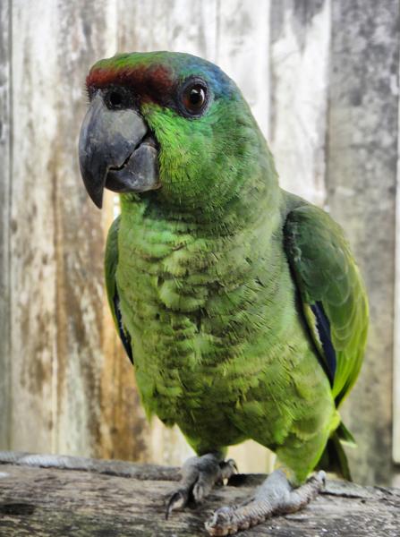 Photo Gallery – The Amazon Rainforest