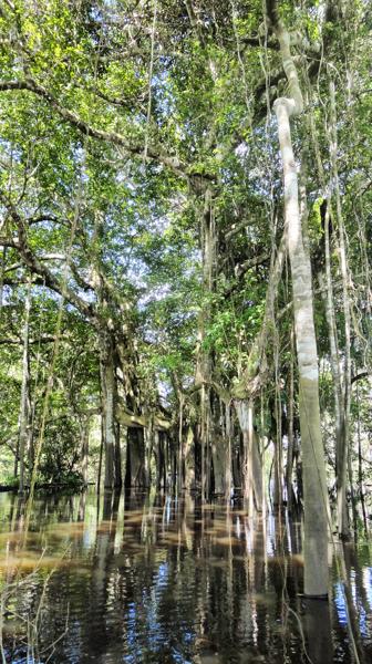 Amazon Rainforest in colombia