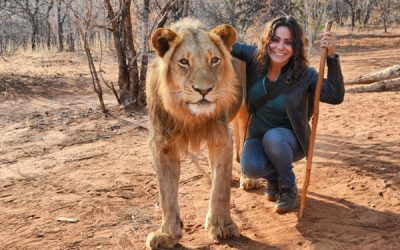 A Walk on the Wild Side – Playing with Lions & Cheetahs